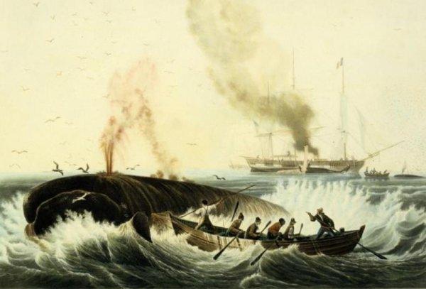 La récré des maths 13 : A la pêche à la baleine